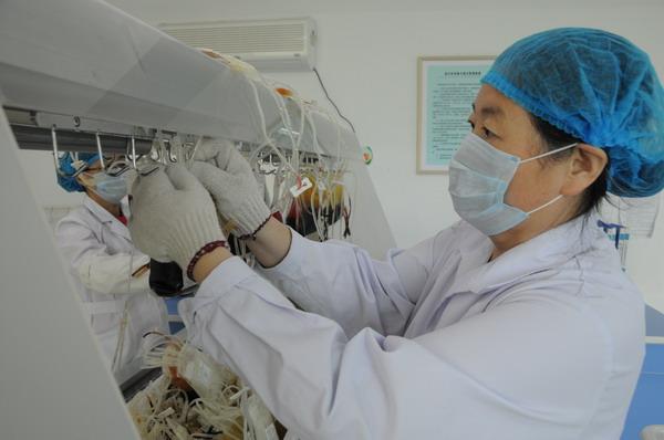 成分科史立新同志在低温操作台前分离成分血。